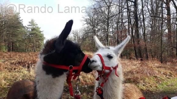 Rando Lamas - Randonnées avec des lamas