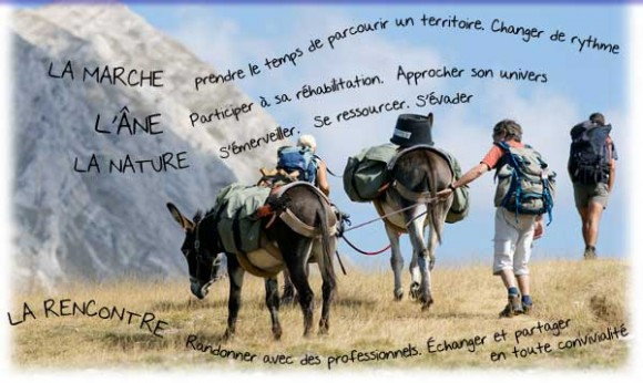 Activité de loisir et de découverte avec Lydie et les ânes